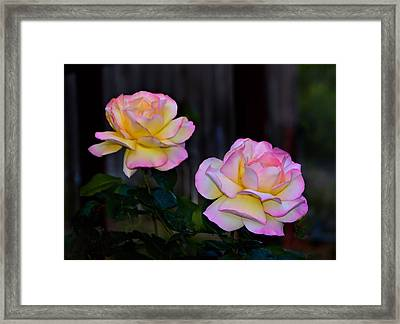 Twin Roses Framed Print