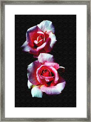 Twin Roses Framed Print by Ralph  Perdomo