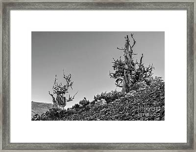 Twin Sentinels Framed Print by Jamie Pham
