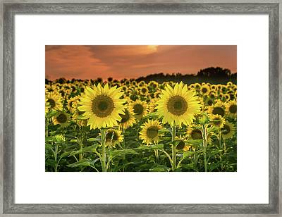 Framed Print featuring the photograph Peaceful Opposition by Bill Pevlor