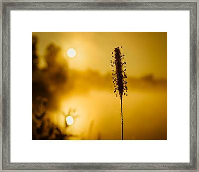 Twin Suns Warm Dew Covered Grass Framed Print