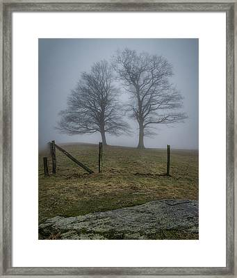 Twin Trees Late Fall Foggy Morning Framed Print