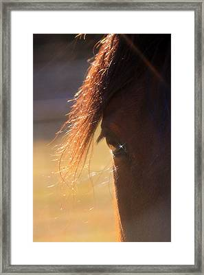 Twinkle Eyed Horse Framed Print by Angie Wingerd