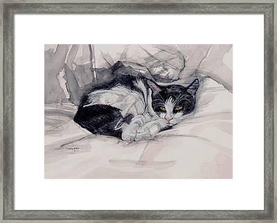 Twinkle The Cat Framed Print by Chana Helen Rosenberg