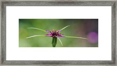Framed Print featuring the photograph Twinkle Twinkle by Richard Patmore