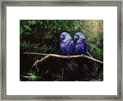 Twins Framed Print by Steve Goad