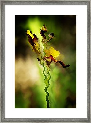 Twist Framed Print by Diane Dugas