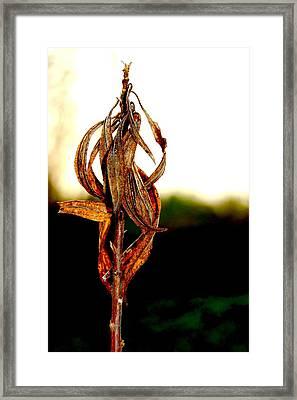 Twist Plant Framed Print by Lauren  Macko
