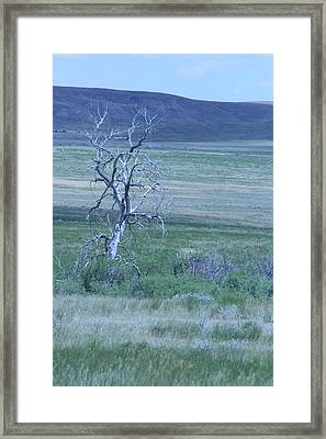 Twisted And Free Framed Print