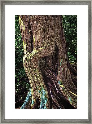 Twisted Arbutus Tree Framed Print