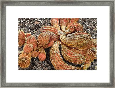 Twisted Arms Framed Print by Linda Parker