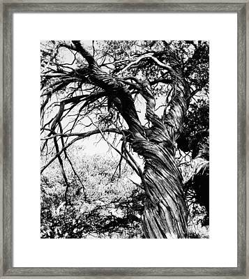 Framed Print featuring the photograph Twisted Beauty by Allan McConnell