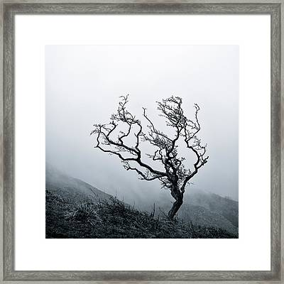 Twisted Framed Print by Dave Bowman