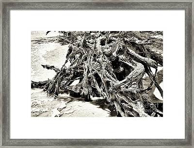 Twisted Driftwood Framed Print