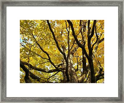 Twisted Gold Framed Print by Jessica Yudis