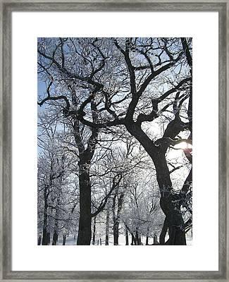 Twisted Framed Print by Jessica Yudis