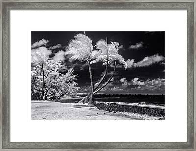 Twisted Palm Trio - Landscape Framed Print by Sean Davey