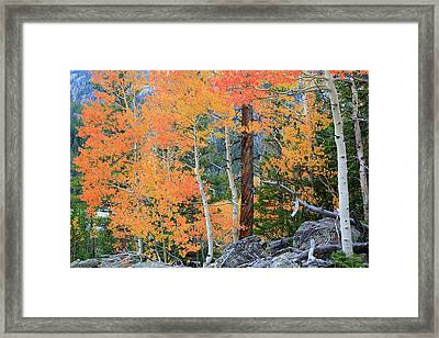 Twisted Pine Framed Print