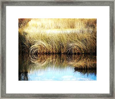 Twisted Reeds Framed Print by Marty Koch