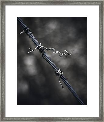 Twisted Framed Print by Scott Norris