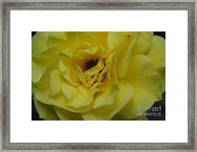 Twisted Sister Framed Print by Sharen Duffing