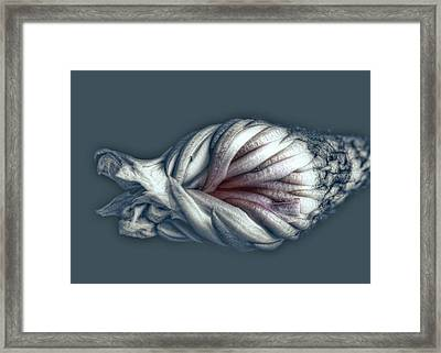 Twisted Sister Framed Print by Wayne Sherriff