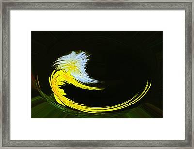 Twisted Sisters Framed Print by David Kehrli