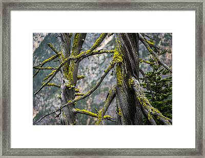 Twisted Sisters Washington Pass Lookout Framed Print by Tommy Farnsworth