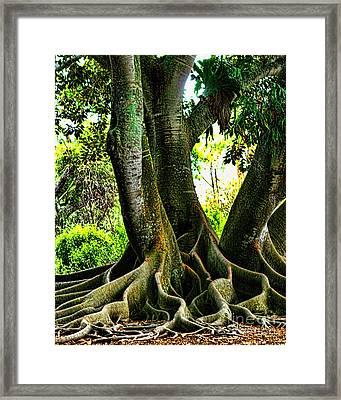 Twisted Framed Print by Tom Prendergast