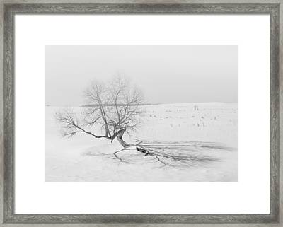 Framed Print featuring the photograph Twisted Tree by Dan Traun