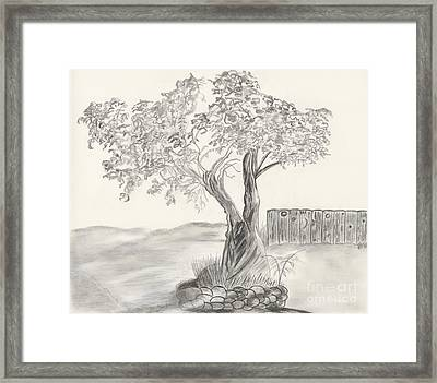 Twisted Trees Framed Print