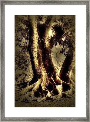 Framed Print featuring the photograph Twisted Trees by Tom Prendergast