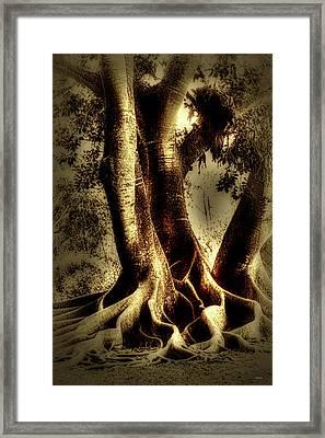 Twisted Trees Framed Print by Tom Prendergast