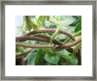 Twisted Vines Framed Print by Patricia M Shanahan
