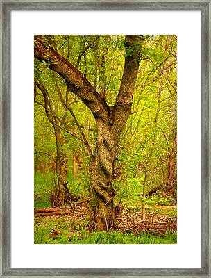 Framed Print featuring the photograph Twisted by Viviana  Nadowski