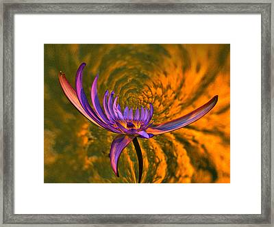 Twisted Waterlily Framed Print