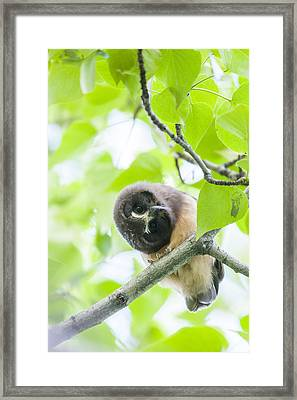 Twisting For A Better View Framed Print by Tim Grams