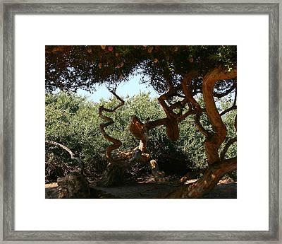 Twisty Tree Framed Print