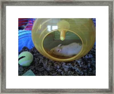 Twizzlers On Her Wheel Framed Print by Bailey Reed