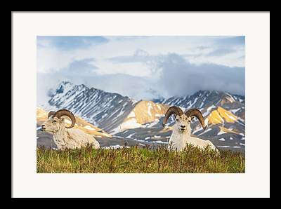 No Look Pass Framed Prints