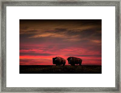 Two American Buffalo Bison At Sunset Framed Print by Randall Nyhof