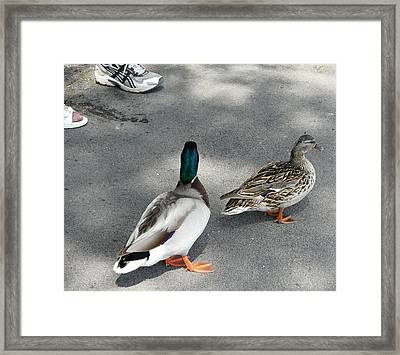 Two And Two Framed Print by Valerie Ornstein