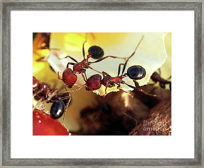 Two Ants In Sunny Day Framed Print