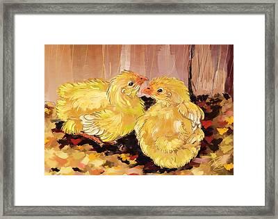Two Baby Cornish Chicks Framed Print