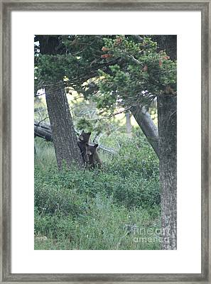 Two Bear Cubs Framed Print