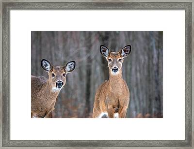 Two Beauties Framed Print