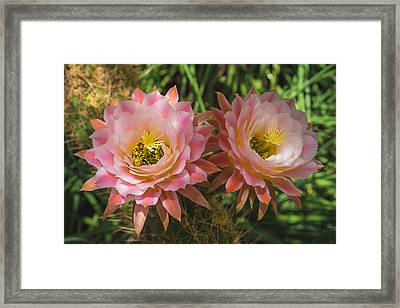 Two Beautiful Souls Framed Print by Pete Mecozzi