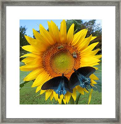 Two Bees And Not Two Bees Framed Print by Diannah Lynch