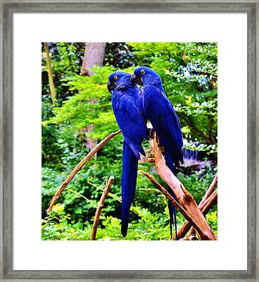 Two Birds Of A Feather Framed Print