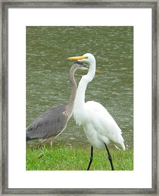 Framed Print featuring the photograph Two Birds Passing By The Pond by Jeanne Kay Juhos